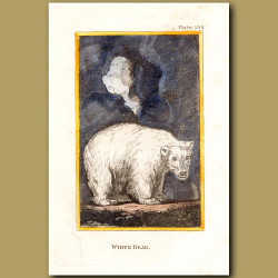 White Bear Or Polar Bear
