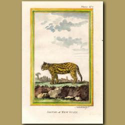 Jaguar Of New Spain