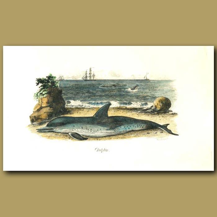 Antique print. Dolphin