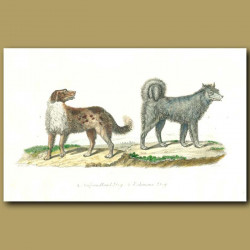 Newfoundland Dog and Eskimaux Dog