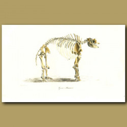 Giant Mastodon
