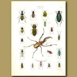 Stag Beetle, Water Beetle, Ground Beetles and others