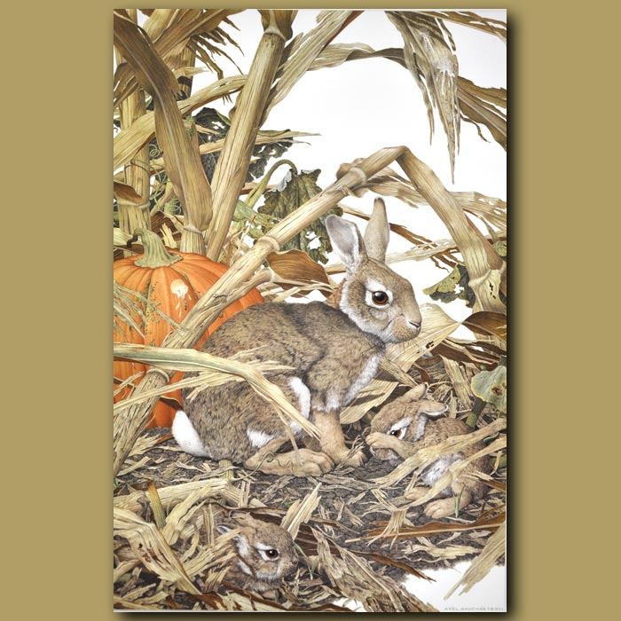 Antique print. Eastern Cottontail Rabbit