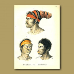 Inhabitants Of New Holland