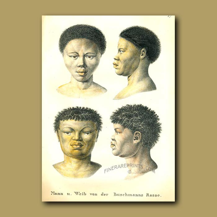 Antique print. Bushmen from Southern Africa