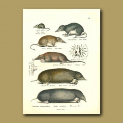 Mouse And Moles