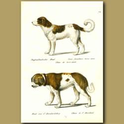 Newfoundland Dog And St.Bernard Dog