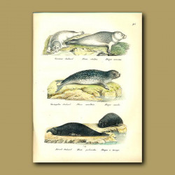 Harbour Seals And Elephant Seals