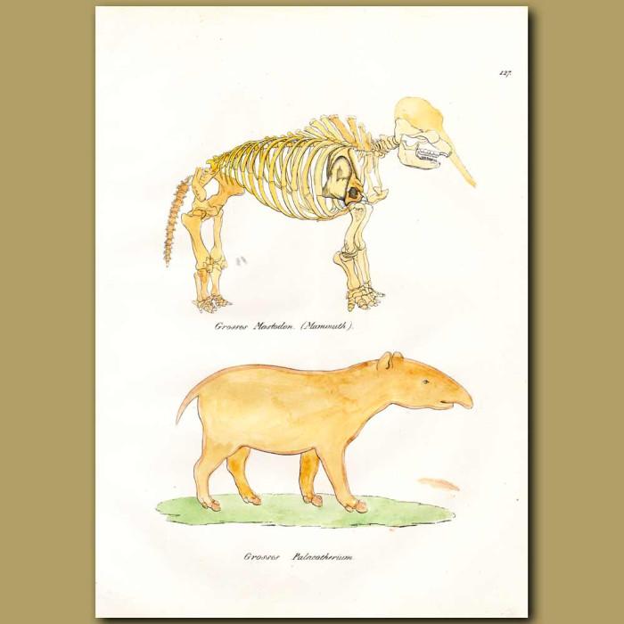 Antique print. Mammoth Skeleton