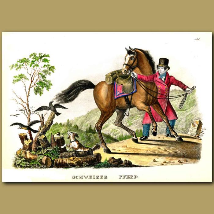 Antique print. Swiss Horse