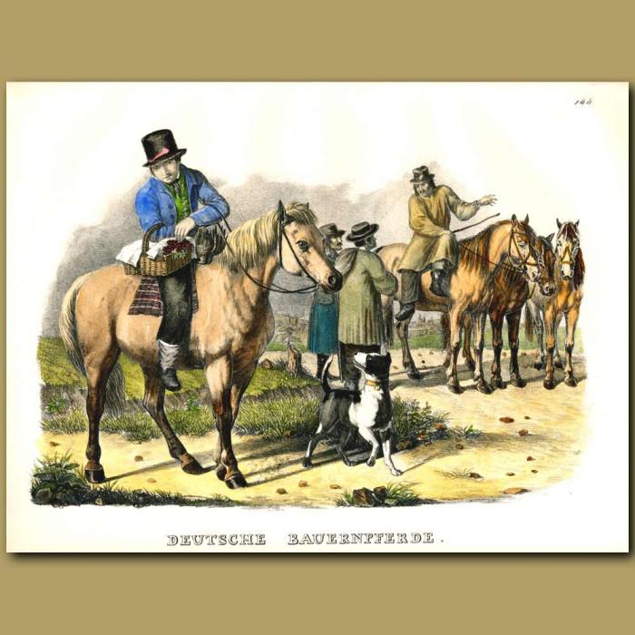 Antique print. German Farm Horses