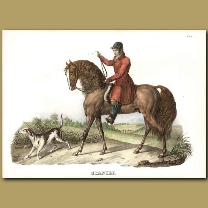 Antique print. Spanish Horse, Rider and Spanish Pointer dog