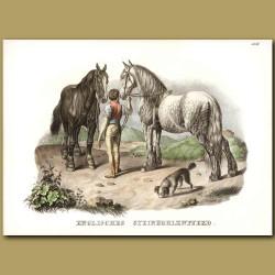 English Cart Horses