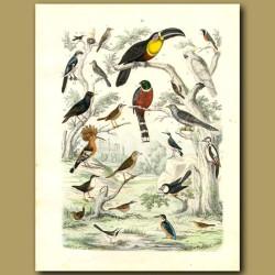 Birds: Toucan, Mexican Trogon, Kingfisher, Woodpecker, Cockatiel Etc