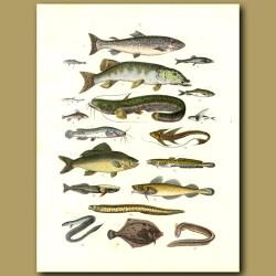 Fish: Trout, Salmon, Cat Fish, Eels, Flying Fish Etc