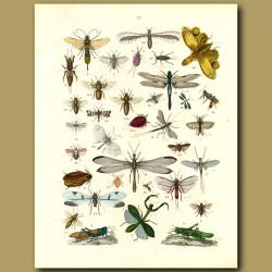 Insects: Dragon Flies, Mantis, Grass Hoppers, Damsel Flies Etc