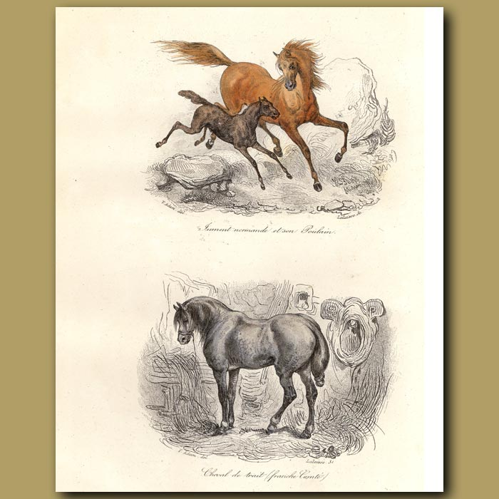Antique print. French horses and French cart horses