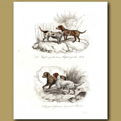 Basset Hounds and Spaniels