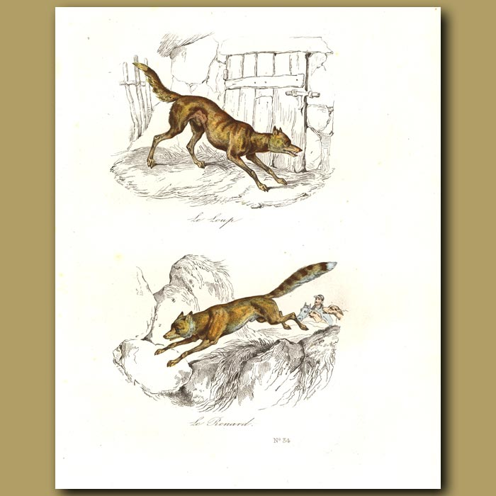 Antique print. Wolf and Fox