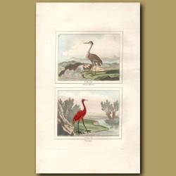 Brown Heron And Flamingo