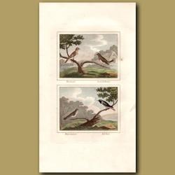 Wood Lark, Robin, Sparrow And Redstart