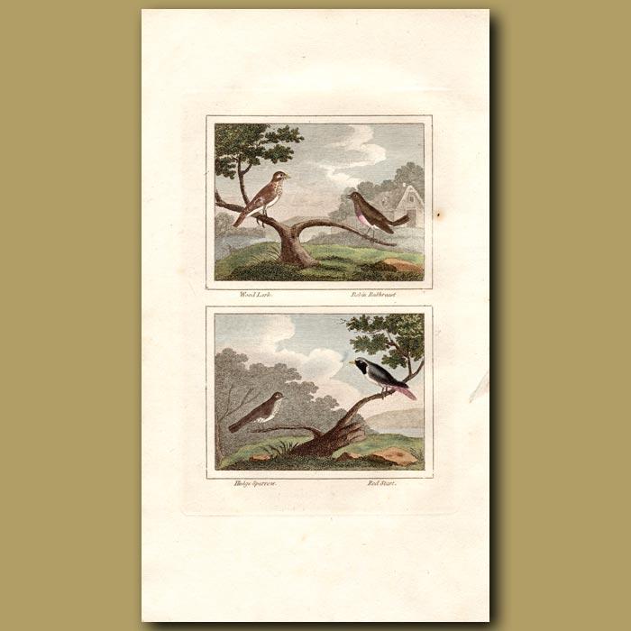 Antique print. Wood Lark, Robin, Sparrow and Redstart