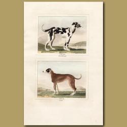 Irish Hound and Great Dane