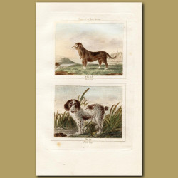 Turnspit Dog and Water Dog