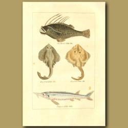 Sea Devil, Ray Fish And Sturgeon