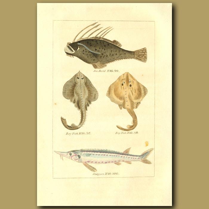 Antique print. Sea Devil, Ray Fish And Sturgeon
