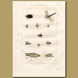 Insects: Dragonfly, Beetle, Locust, Grasshopper