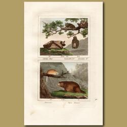 Bats, Dormouse and Alpine Marmot