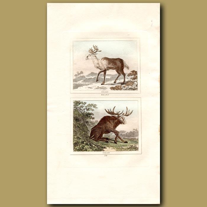 Antique print. Reindeer and Elk