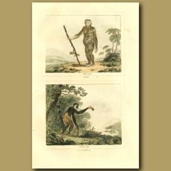 Jocko(Orang-Utan) And Small Gibbon