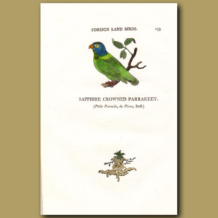 Antique print. Sapphire Crowned Parakeet