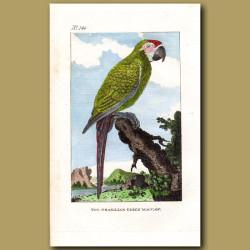 The Brasilian Green Macaw