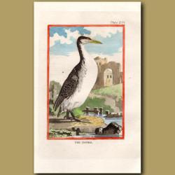 Imber Petrel (extinct)