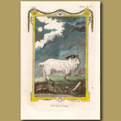 Buck of Juda