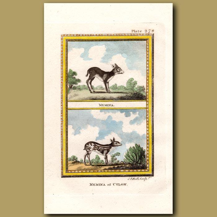 Antique print. Memina of Ceylon