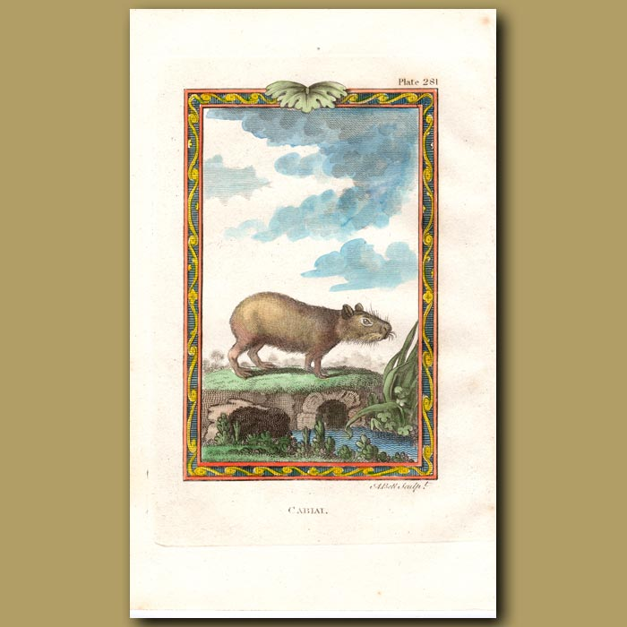 Antique print. Cabiai or Thick-nosed Tapir