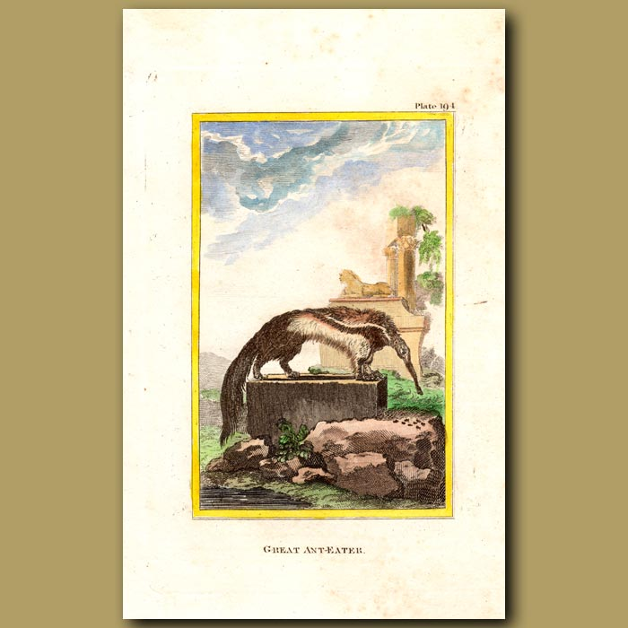Antique print. Great Ant Eater