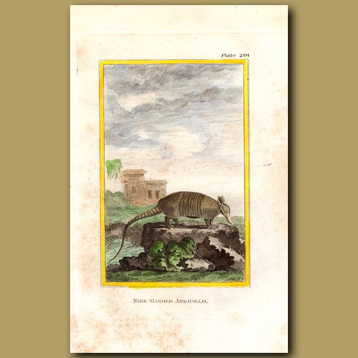Antique print. Nine-banded Armadillo