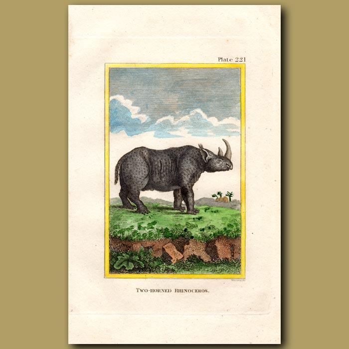 Antique print. Two-horned Rhinoceros