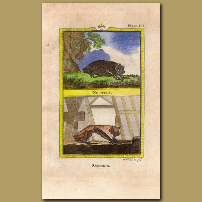 Noctule And Serotine Bats: Genuine antique print for sale.