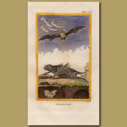 Guiana Bat