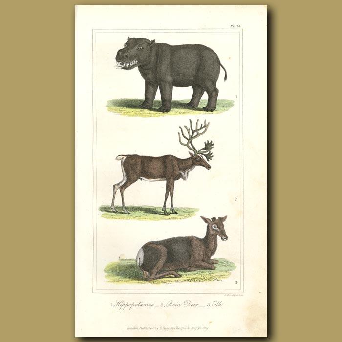 Antique print. Hippopotamus, Reindeer, Elk