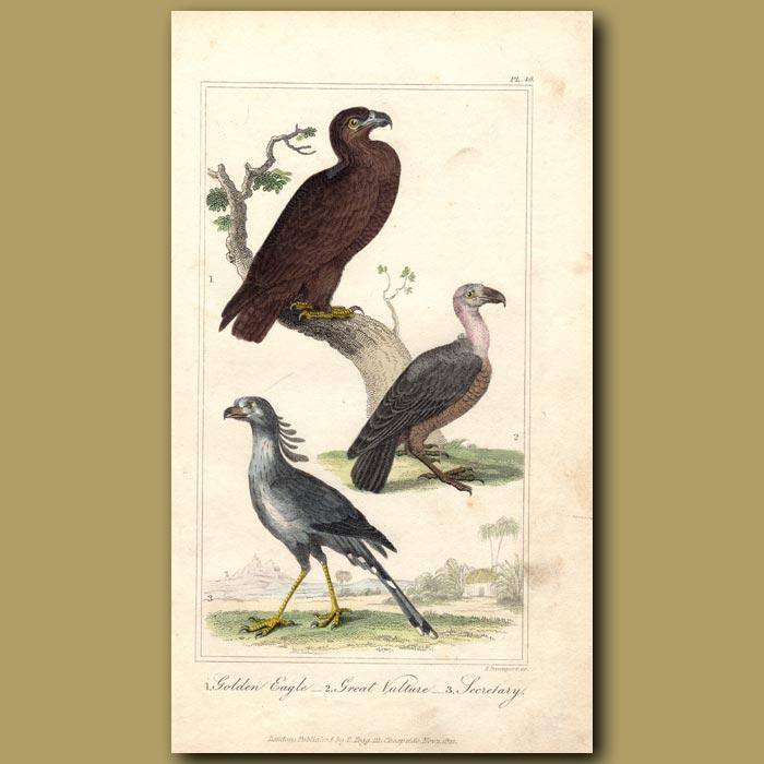 Antique print. Golden Eagle, Great Vulture, Secretary Bird