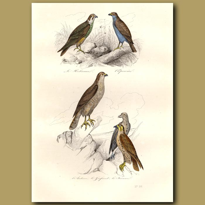 Antique print. Falcons and Hobby Kite
