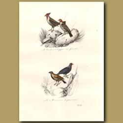 Cardinal And House Sparrow