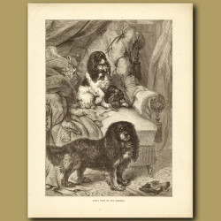 Early Type of Toy Spaniels